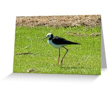 Daddy Longlegs - Pied Stilt NZ Greeting Card