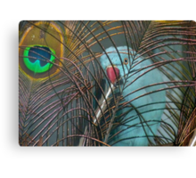 You're In My Face Mr...! - Blue Ringneck Parrot - NZ Canvas Print