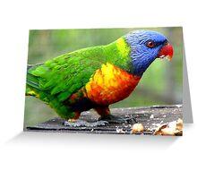 I'm Nuts About Nuts! - Rainbow Lorikeet - Maple Glen NZ Greeting Card