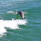 Dolphin Twist by kalaryder