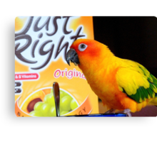 Did You Get It All This Morning! - Sun Conure - NZ Canvas Print