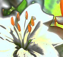 Flower Power by Joe Thill