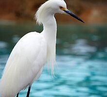 Egret 3 by Anne Smyth