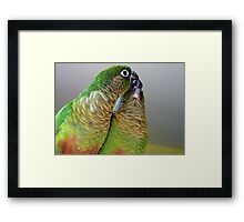 Happy Valentines Day! - Bubbles & Echo - Maroon-bellied  Conure NZ Framed Print