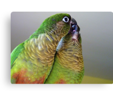 Happy Valentines Day! - Bubbles & Echo - Maroon-bellied  Conure NZ Canvas Print