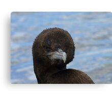 Rare Opportunity Touching NZ Wild Bird- Cormorant/Shag - NZ Canvas Print