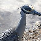 A Heron  by Larry Llewellyn