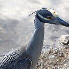 A Heron  by Larry Llewellyn