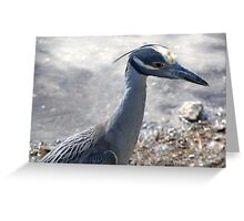 A Heron  Greeting Card