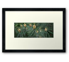 HDR Composite - Pine Flowers Framed Print