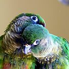 Cuddles - Maroon-bellied Conure - NZ by AndreaEL