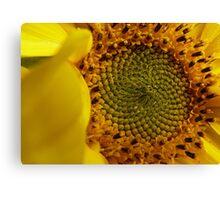 Leonardo Fibonacci - Sunflower - NZ Canvas Print