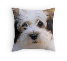 Mojo - shih tzu Bichon - Mossburn Southland Throw Pillow