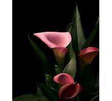 Callas Photographic Print
