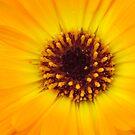 flower macro by Airbrushr  Rick Shores