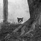 Peek-a-Boo B&W by Bahoke