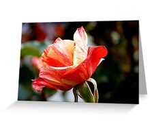 A Single Rose Can Be My Garden...  - Rose Bloom NZ Greeting Card