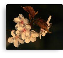 Blossoms At Sunrise Canvas Print