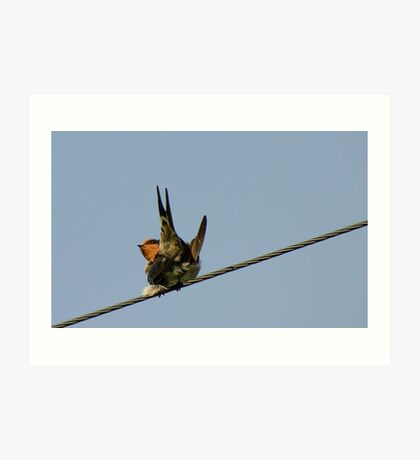 Pookie & The Swallows - Welcome Swallow - NZ Art Print