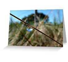 Horton Hears A Who -  Dew Drop - NZ Greeting Card