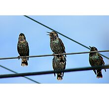 I Can See Clearly Now The Rain Has Gone- Starlings - NZ Photographic Print