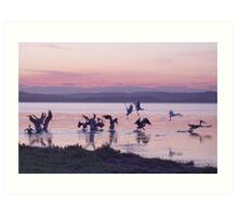 Sunset Again on Tuggerah Lake NSW  Australia Art Print