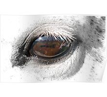 Reflection In A Golden Eye - Horse - VZ Poster