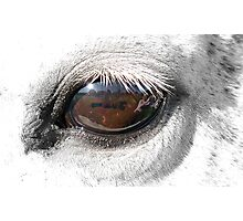 Reflection In A Golden Eye - Horse - VZ Photographic Print
