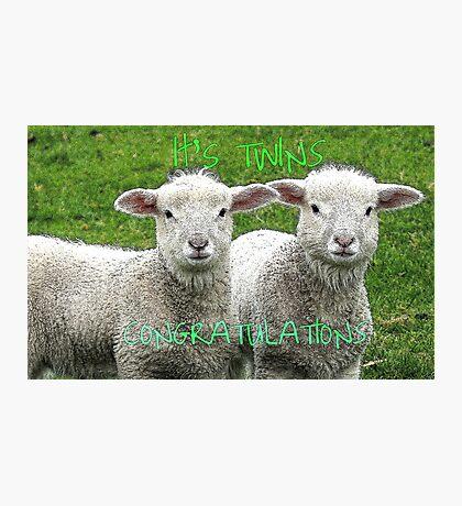 It's TWINS - CONGRATULATIONS - Lambs - NZ Photographic Print