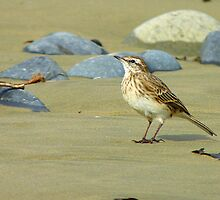 Hey, I'll Pose! - Pipit - New Zealand by AndreaEL