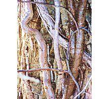 Clinging Vine Photographic Print