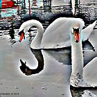 The two swan's  by DES PALMER
