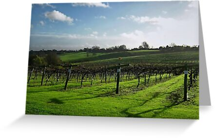 English Vineyard by Nicholas Richardson