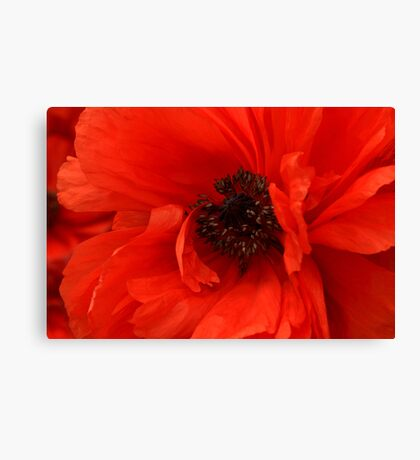Poppy Palette Canvas Print