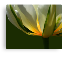 Tulip Glow Canvas Print