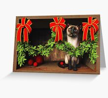 Cats in a cardboard box: Cat No 6 Greeting Card