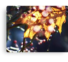 Touched by Winter Sunlight Canvas Print