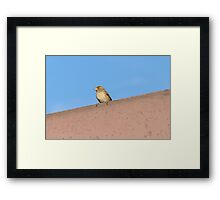 bird on roof Framed Print