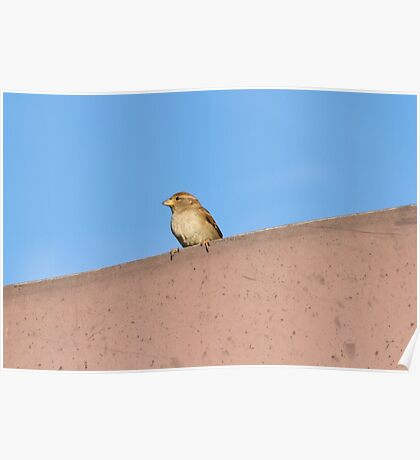 bird on roof Poster