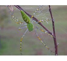 Lynx Spider Photographic Print