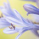 Lady; flowers by Kornrawiee