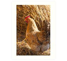 hen in the farm Art Print