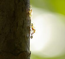 Green Ants by Imageo