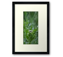 HDR Composite - Thistle Framed Print