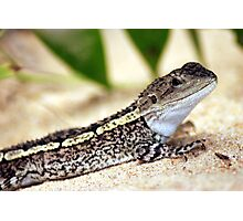 Smiling Lizard - Australia Photographic Print