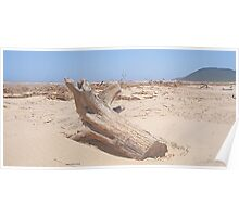 Driftwood on St. Lucia Beach Poster