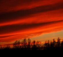 Flaming skies by pat oubridge