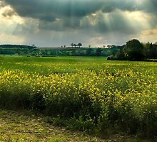 English Countryside by Trevor Patterson