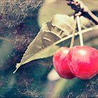 A pair of cherries by Linda Lees