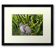 NA741-Tropical Jungle Framed Print